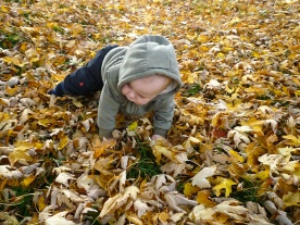 Crawling through the leaves earlier this week.