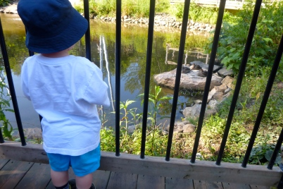 Looking at the sleeping ducks.